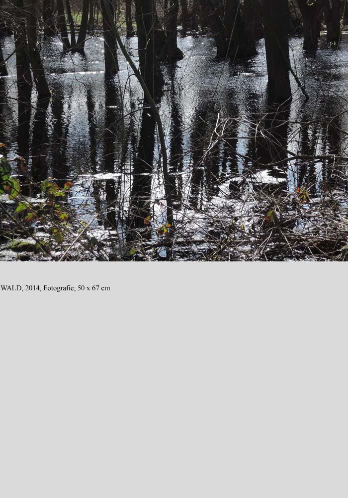 Wald homepage 5 fertig